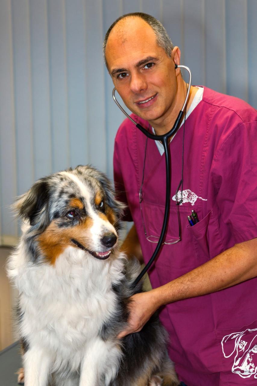 Tierarztsuche